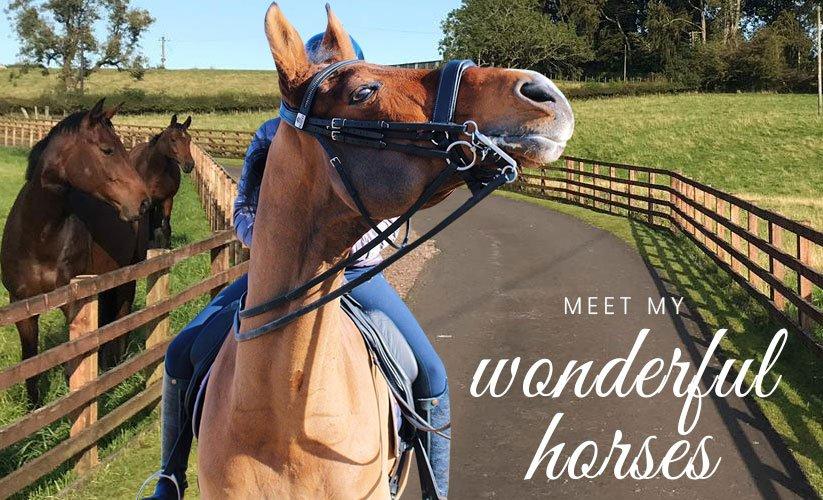 Robyn Smith Horses